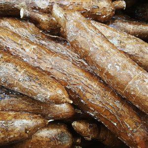 Manioca (Yuca) al kg – Origine: Costa Rica